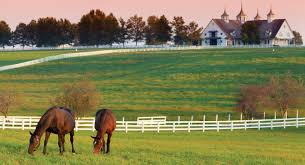 Image result for horse farm picture