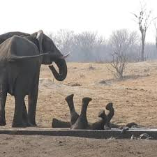 We Love <b>Animals</b> - <b>Baby elephant</b> is stuck upside down while a ...