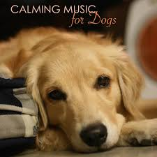 Calming <b>Music</b> for <b>Dogs</b> - Relaxing <b>Music</b> for <b>Dogs</b> and Cats ...
