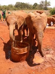 photo essay nairobi elephant orphanage where is yvette share this