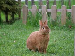 500+ <b>Rabbit</b> Pictures [HD] | Download Free Images on Unsplash