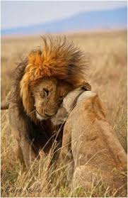 149 Best Pavos images | Big cats, Wild animals, Cutest animals