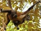 Image result for El Mono-Ara�a