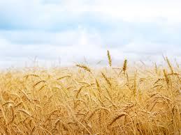 ضرورت-توجه-دولت-به-بخش-کشاورزی-شهرستان-ملکشاهی
