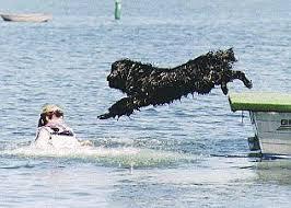 Ποιοι είναι οι καλύτεροι κολυμβητές...
