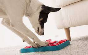What Are The Best Puzzle Toys for <b>Dogs</b> Who Get Bored Easily ...