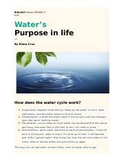 the water cycle study resources  pages essaydocx