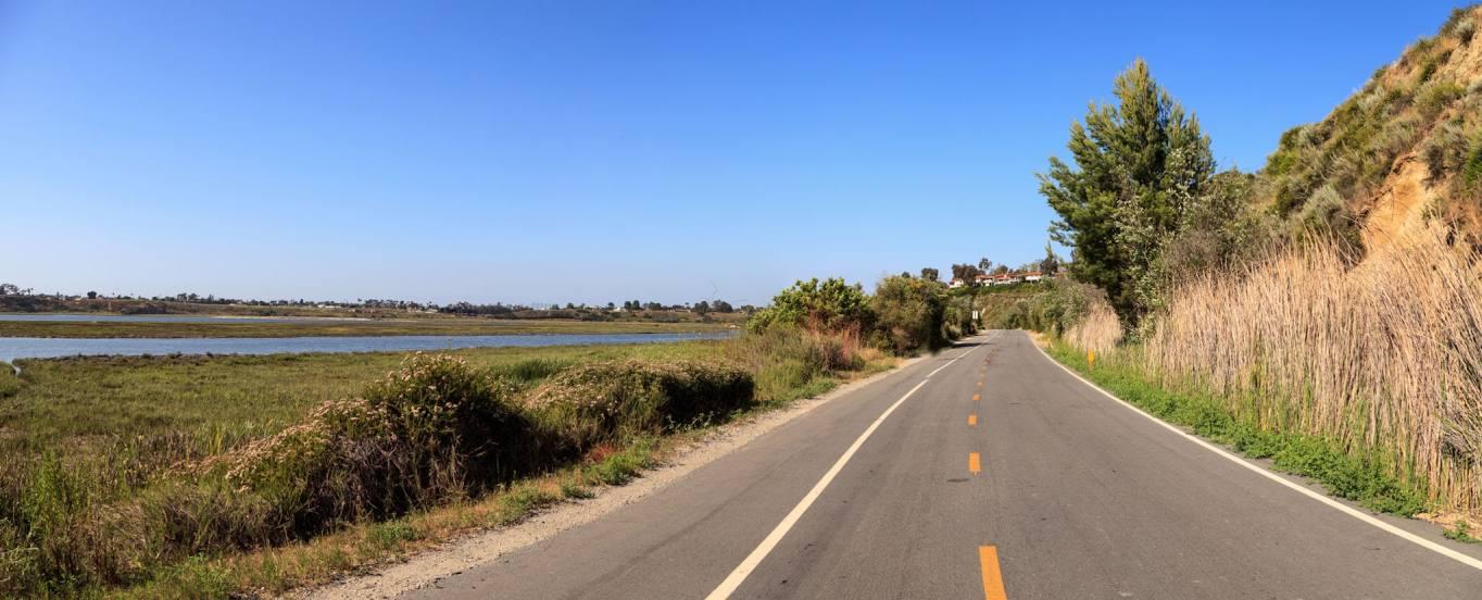 Tree Removal in Costa Mesa, CA