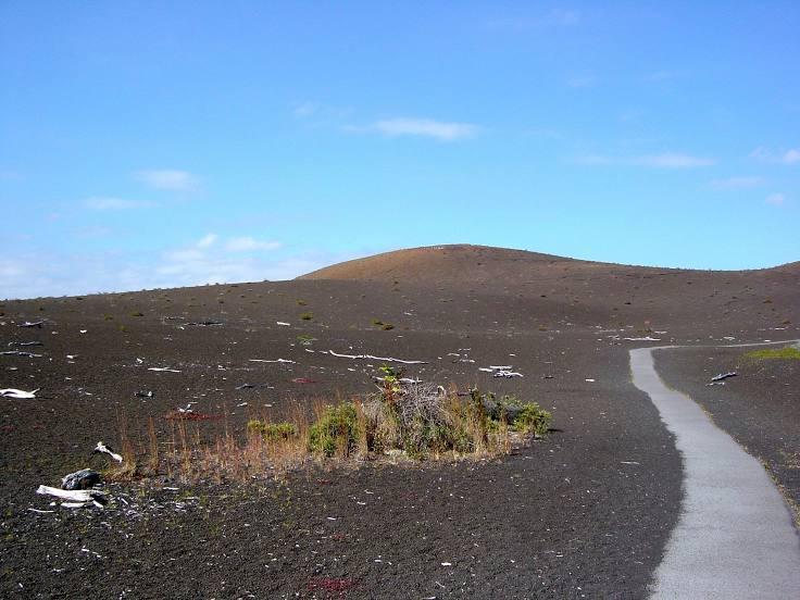 Tree Expert Volcano, HI