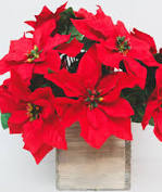 "Outdoor water resistant artificial poinsettia bush in red - 15"" tall"