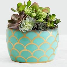 Desert Jewel Succulent Garden - ProFlowers Mother's Day Plants Delivery Indoor House Plants Gifts For Mom 2019