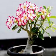 Top 5 No Fail Plants